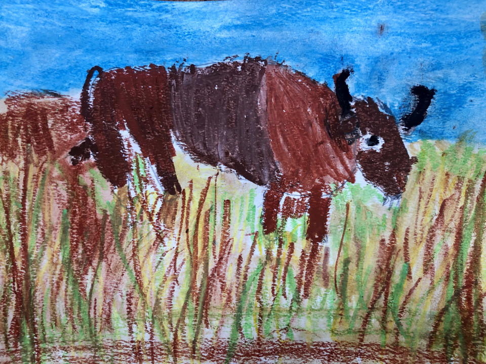 Bison drawing