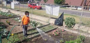 Young boy in an orange shirt stands in the community garden, watering the plants from a spray hose.