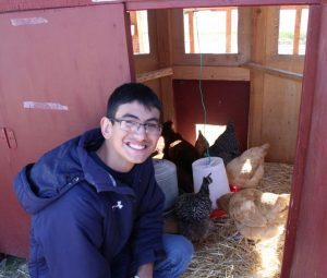 student with chickens